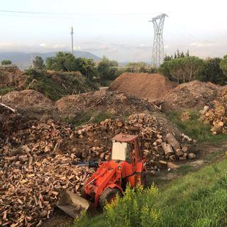 """Abbattimenti di Alberi a Firenze - 9 Camion al giorno di legname che """"puzza"""""""