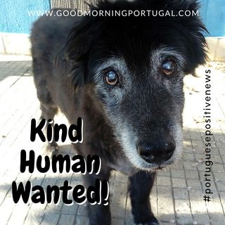 Kind Human Wanted (Now Found!) Portuguese Positive News on Good Morning Portugal!