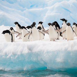 Mega iceberg in rotta contro l'isola dei pinguini