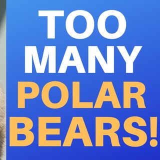 THERE'S TOO MANY POLAR BEARS : The Struggle Continues