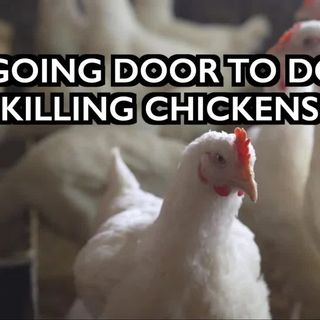 Food Supply Report: UK Gov Door to Door Killing Chickens w/ Christian of the Ice Age Farmer