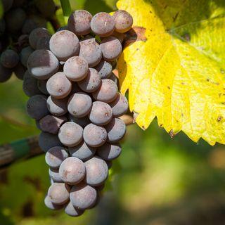Tutto Qui - Martedì 23 Aprile - Piemonte: nasce la Federazione delle Strade dei vini e dei Sapori del Piemonte