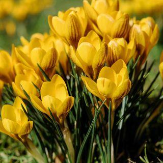 Primavera: un fact-checking sulle mezze stagioni