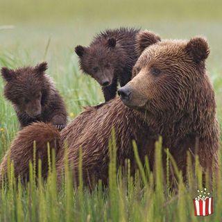 Stanare gli orsi con le ciambelle e ucciderli: il sì di Trump
