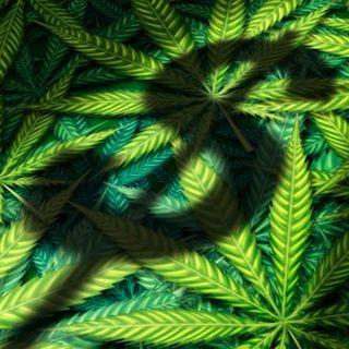 Contro la crisi del CoronaVirus legalizziamo la Cannabis