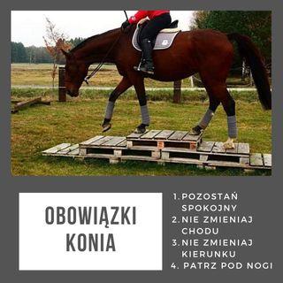 Live 22: Obowiązki konia i człowieka, czyli co każdy z nas robić powinien