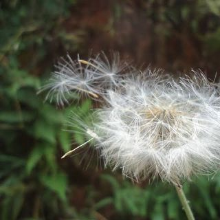 Confidências - Episódio 37 - Ponderando - Crônicas e Poesias
