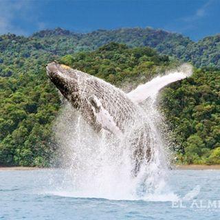 NUESTRO OXÍGENO Ecoturismo el Almejal Bahía Solano - César Isaza