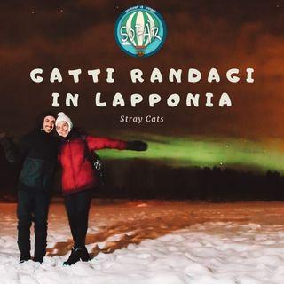Gatti Randagi in Lapponia