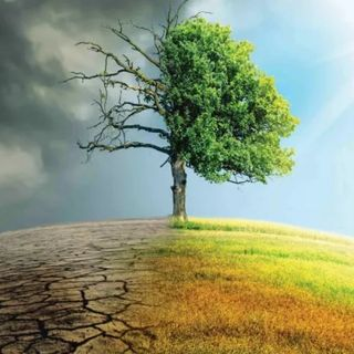 Role of Forests in Climate Change