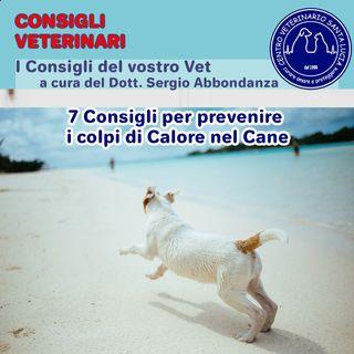 15 - 7 consigli per prevenire i colpi di calore nel cane