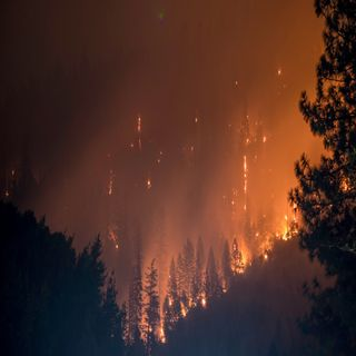 Amazon Rainforest fires and Andrew Luck Retirement