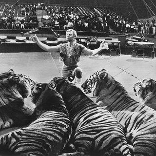 Episodio 9_ Los animales en el circo
