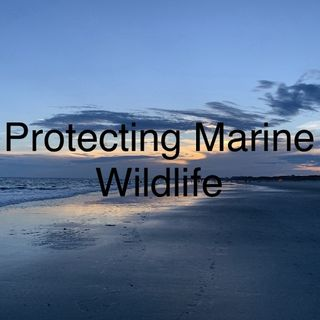 Protecting Marine Wildlife