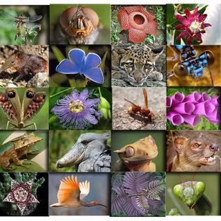 Orto botanico: Biodiversità e Ambiente