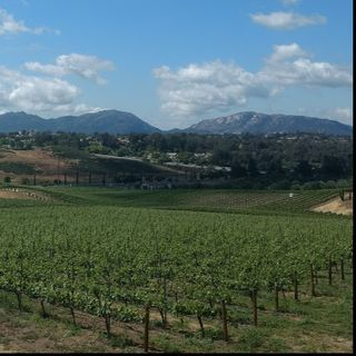 Southern California's Temecula Valley Wine Country - Big Blend Radio Interview with Hilarie Larson