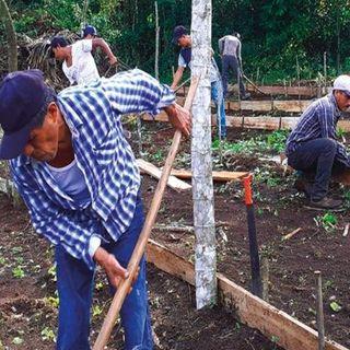 Sembrando vida, beneficia a 421 mil 750 trabajadores del campo en 21 estados