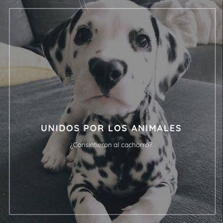 Unidos por los Animales