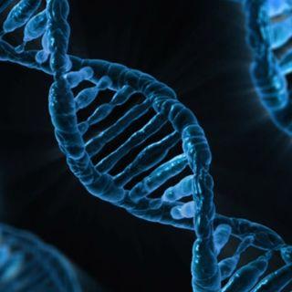 Unità Genetica