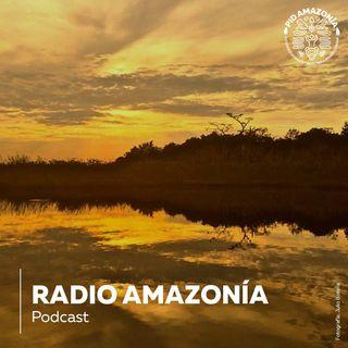 Daniel Gutiérrez, director de Saving the Amazon, nos cuenta el trabajo de la fundación