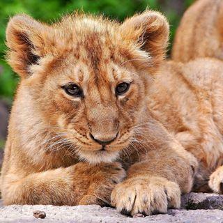 #cspt Una notte da leoni!
