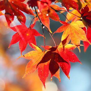 Foglie d'autunno (poesia)