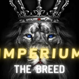 IMPERIUM ATTITUDE || ABSOLUTE POWERFUL MENTALITY