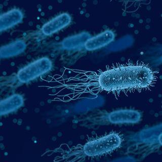 Episódio 4: Outros Tipos De Coloração em Microbiologia