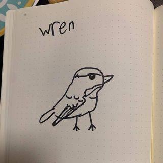 My friend, the little Wren