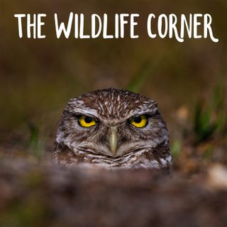 The wildlife corner