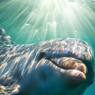 Meditazione del cuore, connessione ai delfini e benedizione dell'acqua