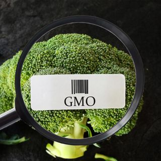 05. GMO Questions and Answers