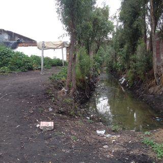 Navega Xochimilco
