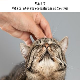 Brain and Bible: Rule #12 Pet a cat when you encounter one on the street
