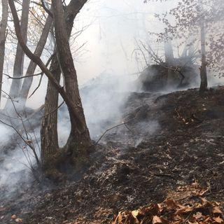 """Tutto Qui - venerdì 10 novembre - La situazione post incendi e la rassegna """"Un Sasso nello stagno"""""""