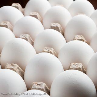 Scrambling for eggs? Volatility in the Egg Market