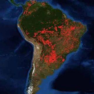 Amazonía debe ser protegida: ONU