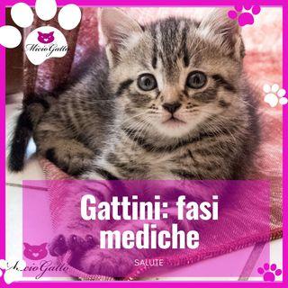 Ho adottato un gatto: quali sono le fasi mediche da seguire?