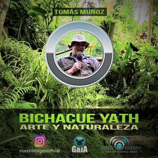 NUESTRO OXÍGENO Bichacue Yath Arte y naturaleza - Tomás Muñoz