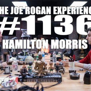 #1136 - Hamilton Morris