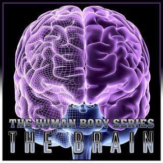 The Brain (The Human Body Series)