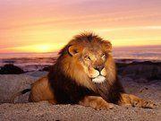 Prophetic Judah Ministries