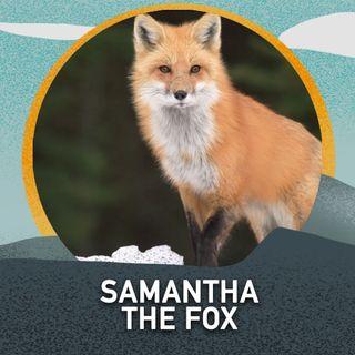 Samantha the Fox