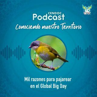 Mil razones para pajarear en el Global Big Day