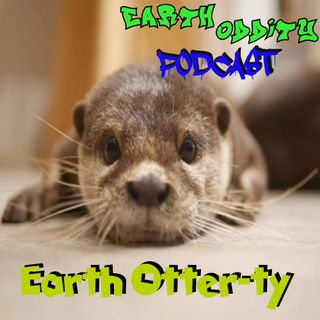 Earth Oddity 102: Earth Otter-ty