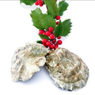 Enjoy Oysters at Home Anytime
