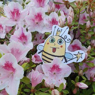 La Pricipessa E L'ape Regina