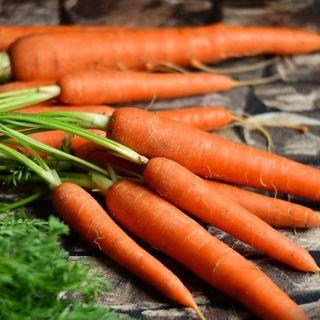Cemento a base di carote