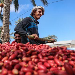 #ANBA 51: Já pensou em fazer negócios com a Palestina?