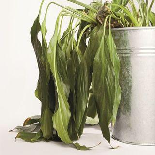 ¿Plantas con estrés?